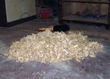 18_Wood-Shavings- and-no-end.jpg